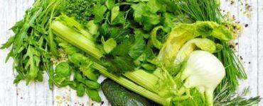 Zusammenstellung grüner Kräuter in unverarbeiteter Form