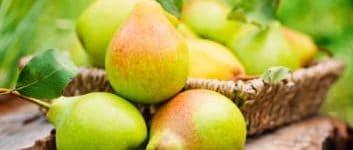 frisch gepflückte Birnen auf dem Tisch
