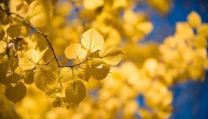 blätter im Herbst: Sonnenstrahlen versorgen dei Haut mit Vitamin D